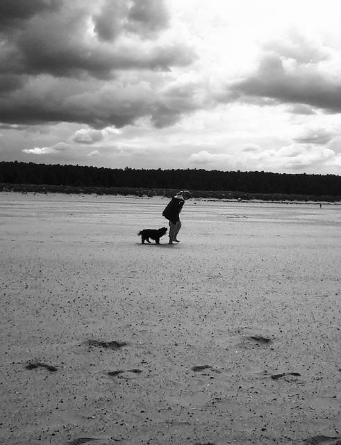 dog on sand